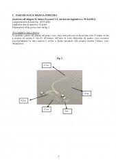 Decreto_B1_B_BE_Pagina_7.jpg