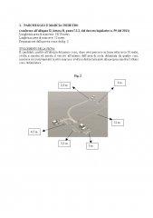 integrazioneCircolareB1_BeBE_Pagina_23.jpg